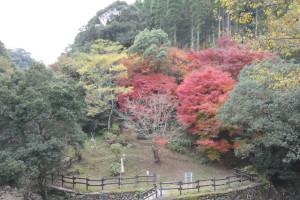 紅葉が綺麗でした