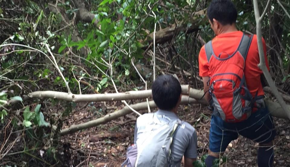 荒れた林道の整備