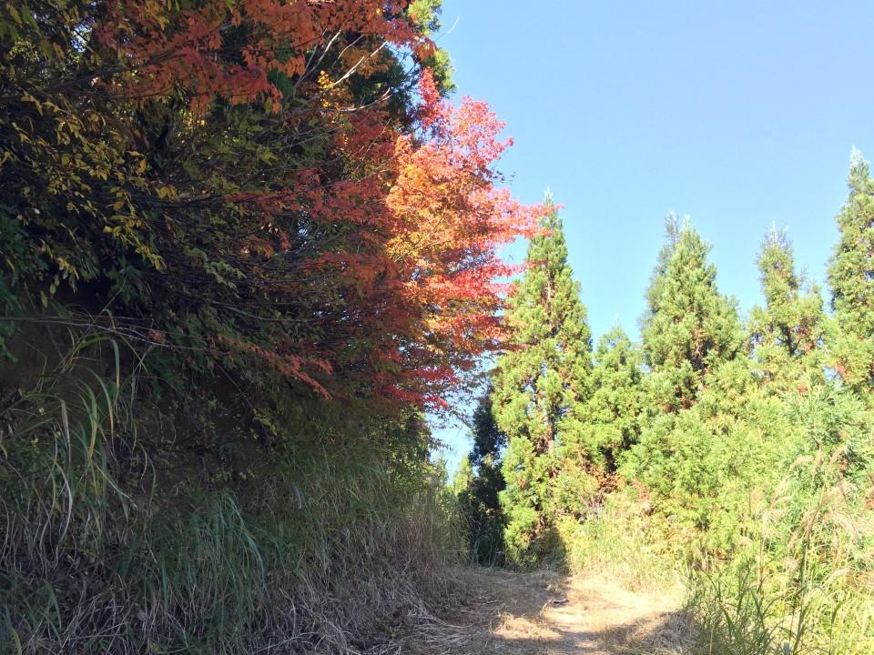 紅葉シーズン真っ盛り