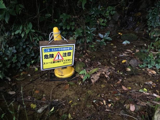 スズメバチの水飲み場