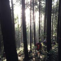 木々の木漏れ日がきれい